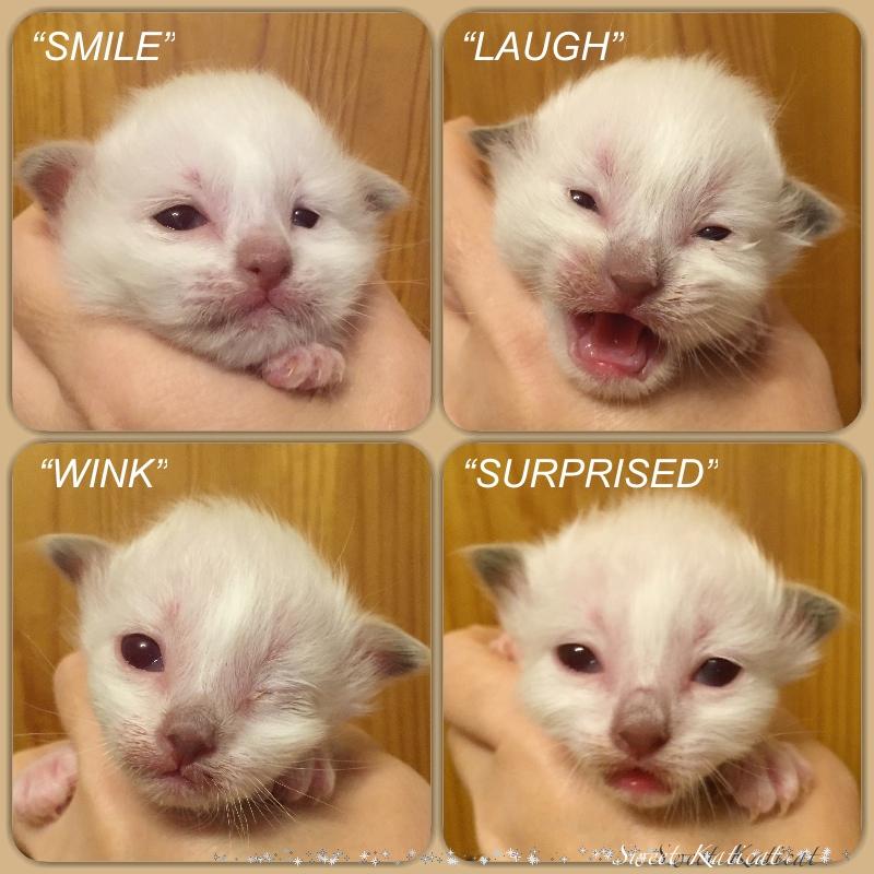 smile_wink