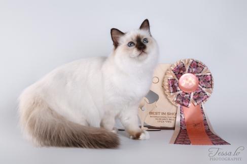 Mercedes Sweet Katicat