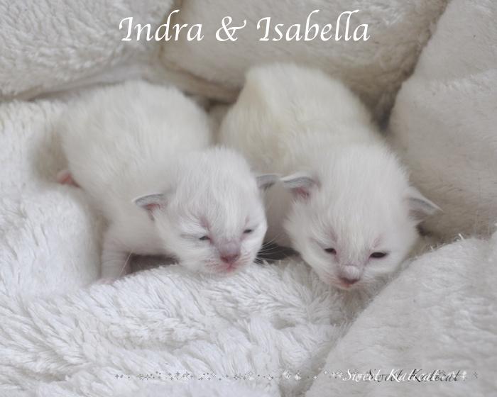 Isabella_001