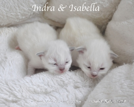 Indra ja Isabella