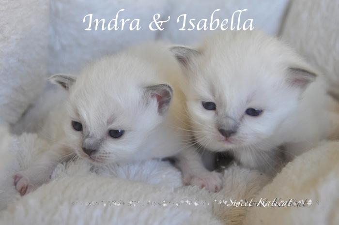 Isabella_002