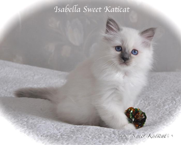 Isabella_004