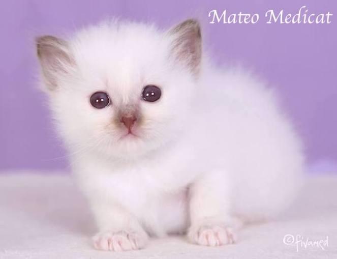 Mateo0001