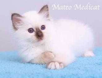 Mateo0004
