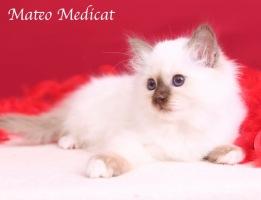 Mateo0010