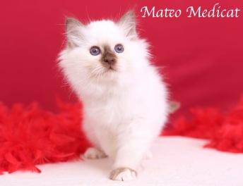 Mateo0012