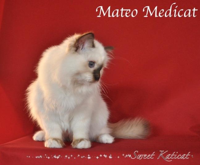 Mateo0017