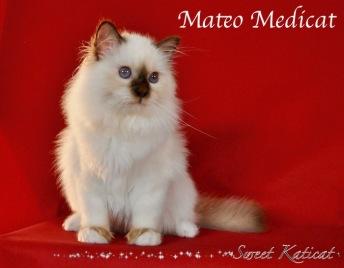 Mateo0018
