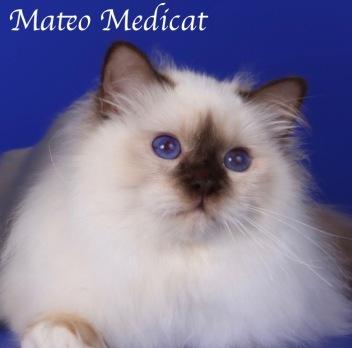 Mateo0028