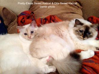 Pretty-Elena ja Dita Sweet Katicat