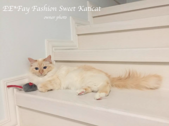 Fay Fashion Sweet Katicat