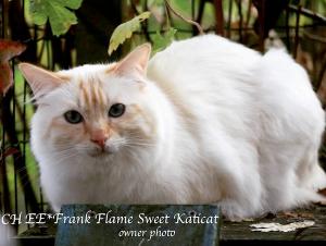 Frank Flame Sweet Katicat_