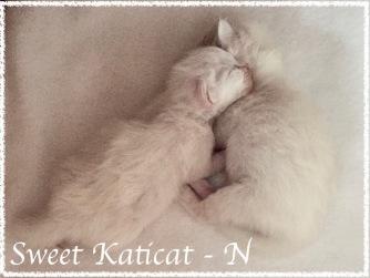 Sweet Katicat_N