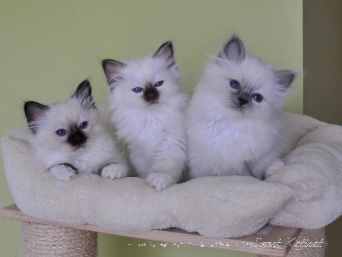 Olivier, Oscar, Olivia