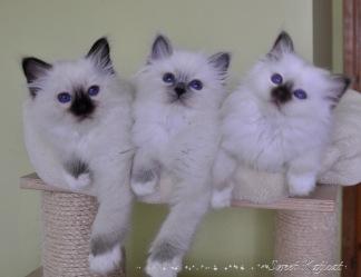 Olivier, Olivia, Oscar