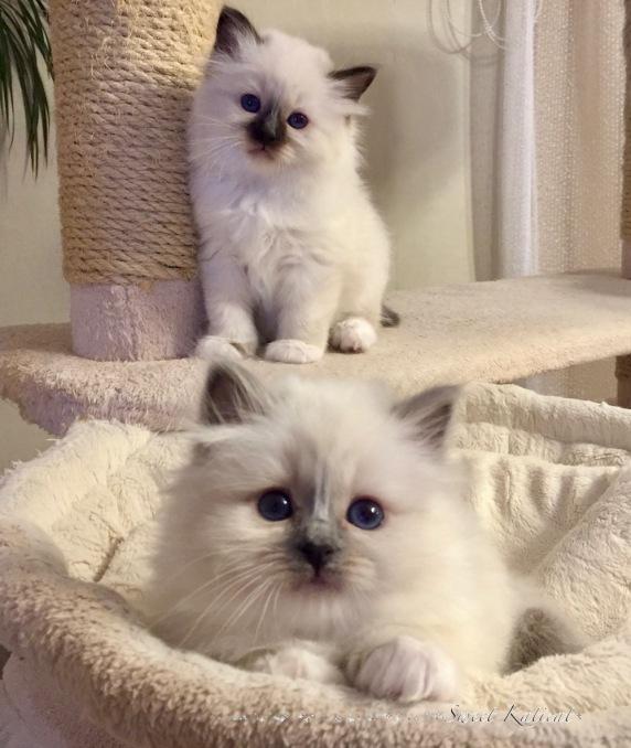 Olivia ja Olivier