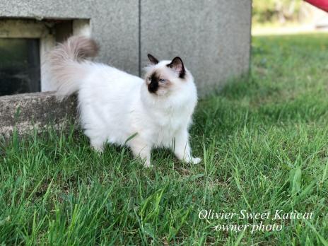 Olivier Sweet Katicat2