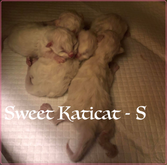 2018-12-19 Sweet Katicat
