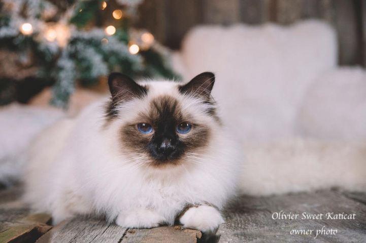 olivier sweet katicat copy