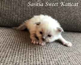 saskia1