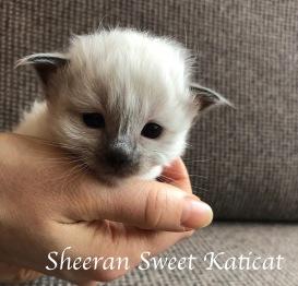 sheeran3