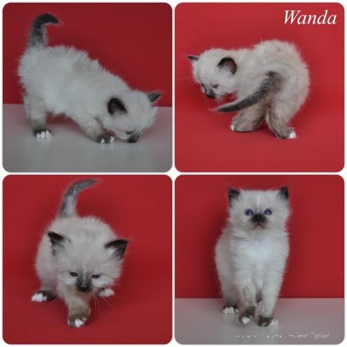 Wanda_1m