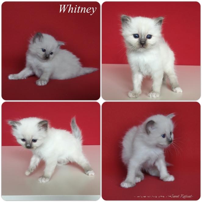 Whitney_1m