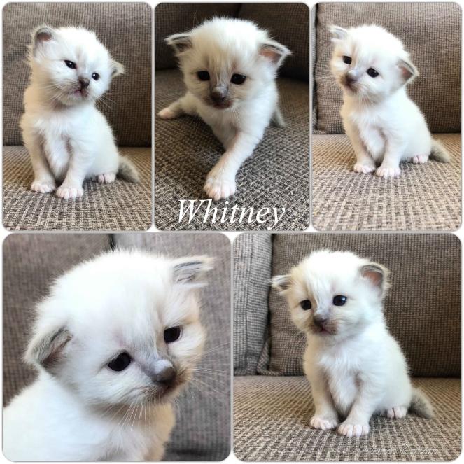 Whitney_3weeks
