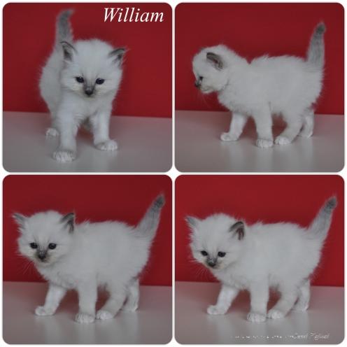William_1m