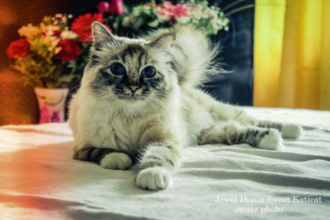 Jewel Diana