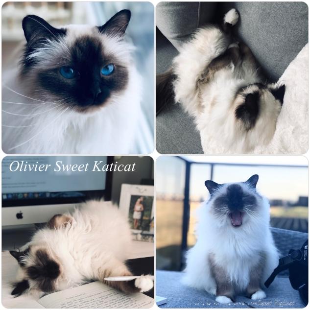 Olivier 2y