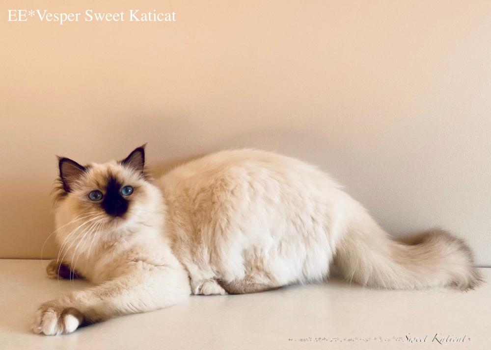 Vesper sweet Katicatjpeg