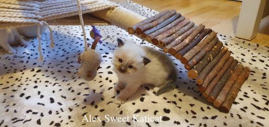 Alex3w