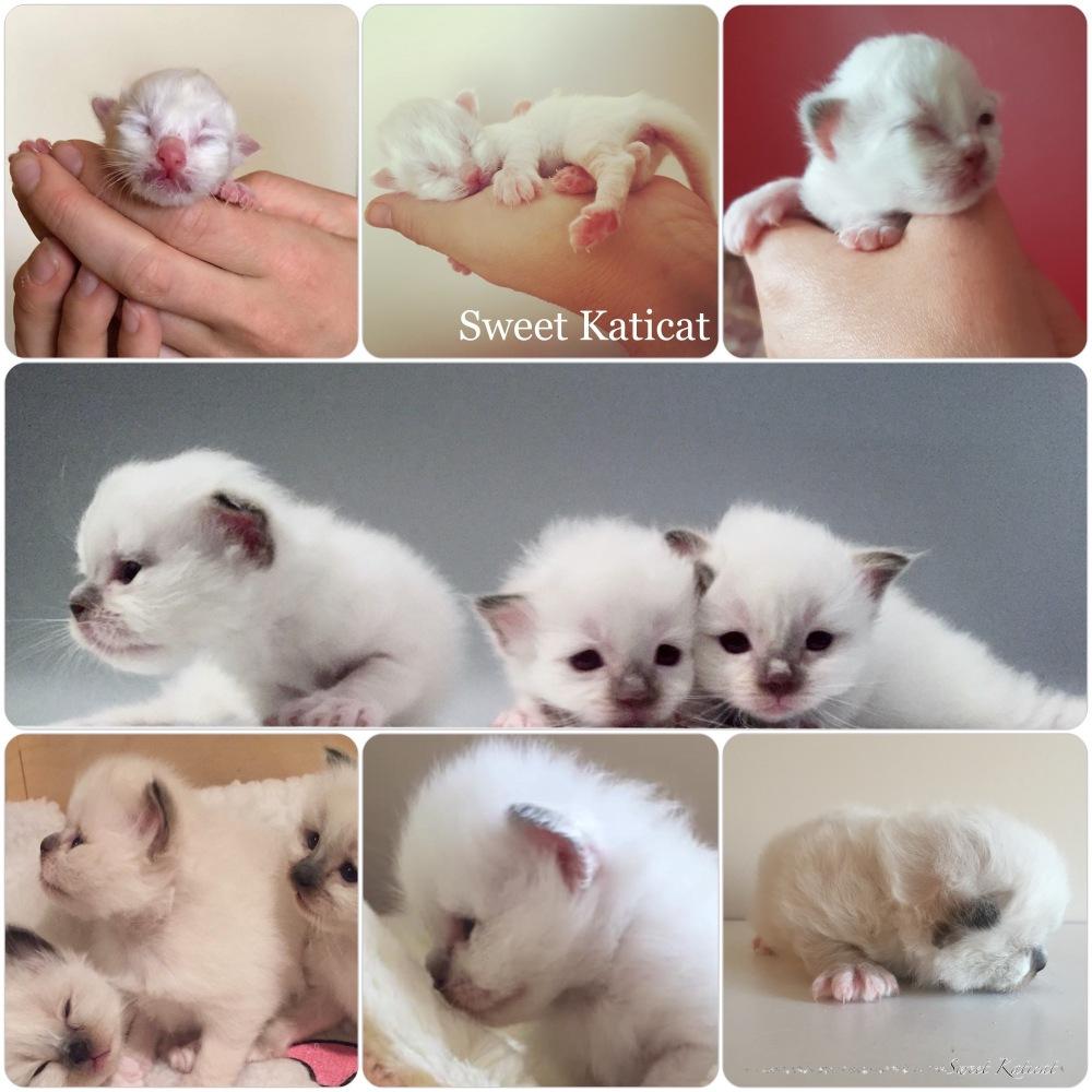 sweet katicat